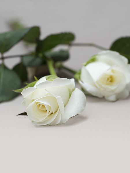 Funeral : Single White Rose Stem