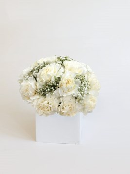 Arrangements: Carnation Celebration